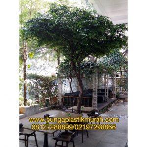 Pohon Beringin T. 3 meter