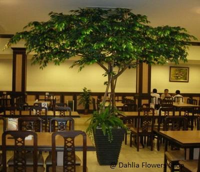 Pohon plastik beringin  tinggi 3,5 meter