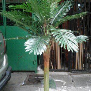 Pohon Import